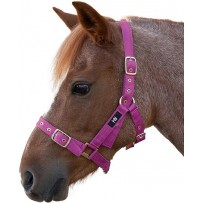 Hy Holly Fully Adjustable Head Collar