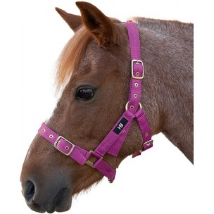 http://www.horseandrider.co.uk/1053-2167-thickbox/hy-holly-fully-adjustable-head-collar.jpg