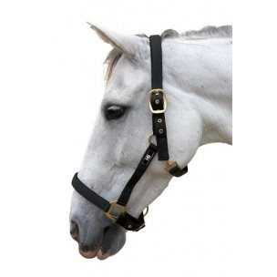http://www.horseandrider.co.uk/316-1516-thickbox/hy-classic-head-collar-.jpg